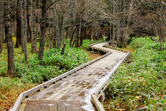 Wooden pathway in forest Stock Images