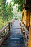 wooden pathway in forest Royalty Free Stock Photo