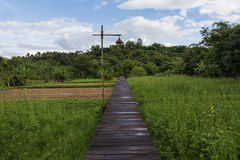 Wooden pathway, Green rice fields Royalty Free Stock Photography