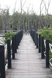 Wooden pathway of nature education. Royalty Free Stock Photos