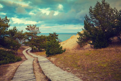 Wooden pathway in park Royalty Free Stock Photography