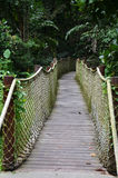 Wooden pathway into rain forest jungle Royalty Free Stock Photo