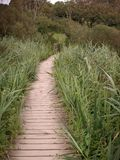 Wooden Pathway Stock Images