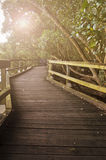 Wooden pathway with solar flare Stock Image