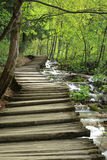 Wooden pathway in spring forest near stream Stock Photo