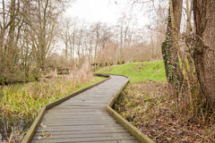 Wooden pathway through swamp forest Royalty Free Stock Photo