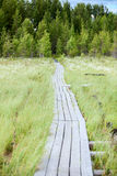 Wooden pathway between swamp to evergreen forest Stock Photo