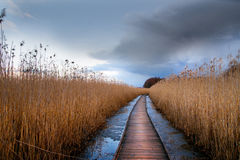 Wooden pathway in wetland Royalty Free Stock Image