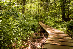 Wooden pathway winds through a lush green forest Stock Photography