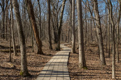 Wooden pathway. Royalty Free Stock Image