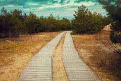Wooden pathways in the park Stock Image