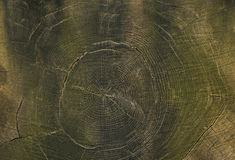 Wooden pattern. Of growth rings of a tree royalty free stock photos