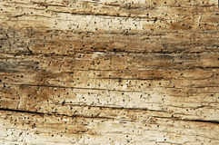 Wooden pattern, natural wood with holes Royalty Free Stock Photography