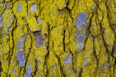 Wooden pattern and texture of tree bark. Abstract nature background stock photography