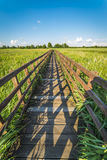 Wooden pavement in Narew National Park. Narew National Park in Poland Stock Photography