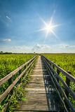 Wooden pavement in Narew National Park. Narew National Park in Poland Stock Images