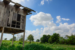 Wooden pavilion surrounding by paddy field Royalty Free Stock Images