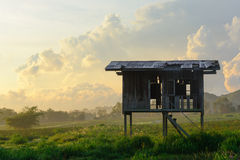 Wooden pavilion surrounding by paddy field. In thailand Stock Image