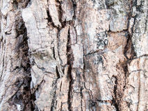 Wooden peel from wild tree Stock Image