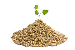 The wooden pellets Stock Photography