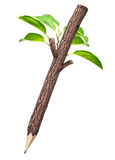 Wooden Pencil With Leaf Stock Image