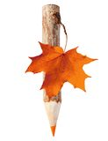Wooden pencil with maple leaf. stock images