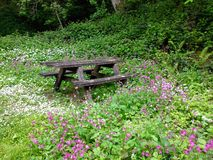 Wooden Picnic Bench Amongst Woodland Flowers Stock Images