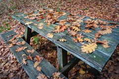 Wooden picnic table covered with autumn leaves. Wooden picnic table and bench covered with autumn, fall leaves Royalty Free Stock Photo