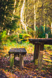 Wooden picnic table and bench in woodland. Wooden picnic table and bench in autumnal woodland with a golden sunlit background Royalty Free Stock Image