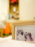Wooden picture frame of two shih tzu dogs, focused on the face of the left dog Royalty Free Stock Photo