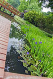 Wooden pier and beautiful plants in a japanese garden Royalty Free Stock Photo