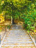 Stairs to the forest stock images