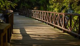 Wooden pier that crosses the Cenote royalty free stock photo
