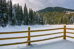 Wooden pier on forest lake in winter. Beautiful morning scenery in spruce forest stock photo