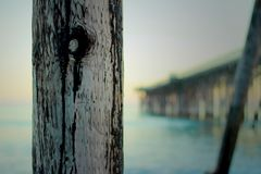 Wood pier piling with blurred background ocean pier Stock Photos