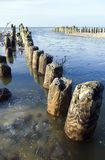 Wooden pier with poles. Seascape, line of wooden poles leading into the sea. River with ice floating into the sea. The Baltic Sea Royalty Free Stock Image