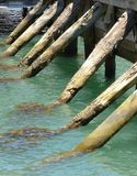 Wooden pier poles in water Stock Photography