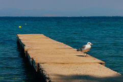 Wooden pier and seagull Royalty Free Stock Photography