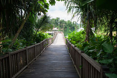 Wooden pier on tropical lake. Royalty Free Stock Photography