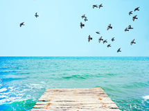 Wooden pier with view to blue sea and flock of pigeons Royalty Free Stock Photos