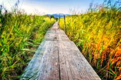 Wooden pier which extends across the marshes and greenery Stock Image
