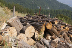 Wooden pile. Pile of wooden stacks lying on the ground Royalty Free Stock Photo