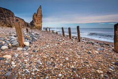 Wooden Piles on Chemical Beach Royalty Free Stock Images