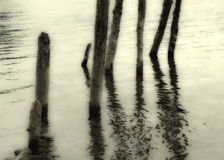 Wooden pilings Stock Photography