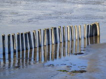 Piles wood water Wooden pilings in the water  Stock Photo