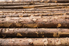 Wooden pine logs with bark stock photography