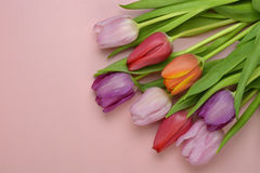 Wooden pink empty copy space background with colorful tulips. Wooden pink empty copy space background with fresh colorful spring tulips. In the corner pink Stock Photography