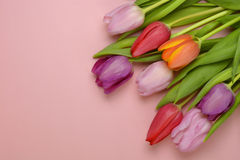 Wooden pink empty copy space background with pink tulips. Wooden pink empty copy space background with fresh colorful spring tulips. In the corner pink tulips Royalty Free Stock Photo