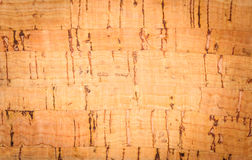 Wooden pith a texture Stock Photo