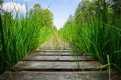 Wooden plank board walkway Royalty Free Stock Images